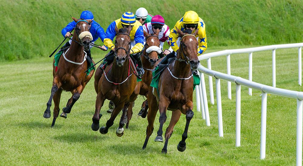 Fyfield Travel Horse Racing